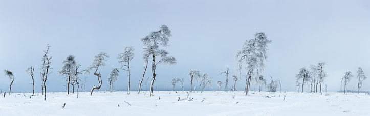 Die Bäume von Noir Flohay als Panorama