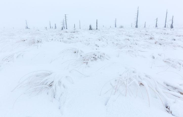 Entlang des verschneiten Pfades schauten teilweise nur noch die obersten Gräser heraus.