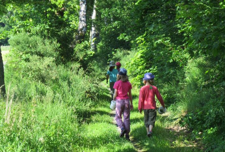 Vier Wildkräuter-Entdecker im Laubwald.