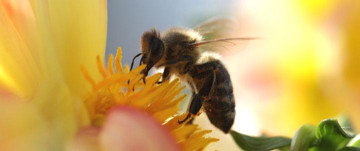 Artenvielfalt Artensterben Bedrohung aktuell