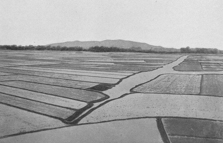 Rizières irriguées (Delta de Canton). L'eau est distribuée par tout un réseau de canaux. Villages cachés dans les arbres. Au fond, les collines qui limitent le delta.