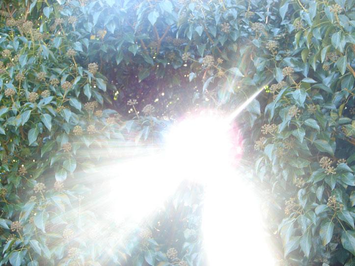 Reines, weißes Licht aus der Schöpferquelle, das alle Farben enthält (Aufnahme des hinunterströmenden Himmelslichtes auf die Erde = wie oben - so unten)