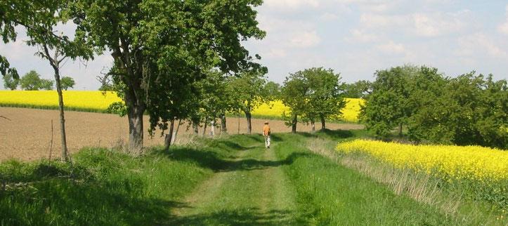 Feldweg von Heynitz nach Wunschwitz (ehemaliger Salzweg), Foto: Elisabeth von Watzdorf