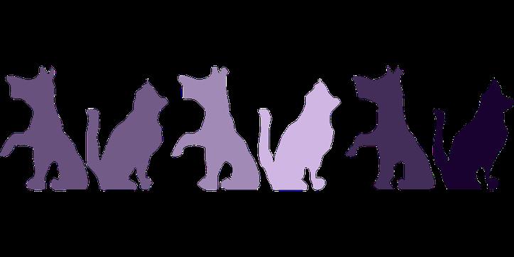 Assurance animaux chat et chien