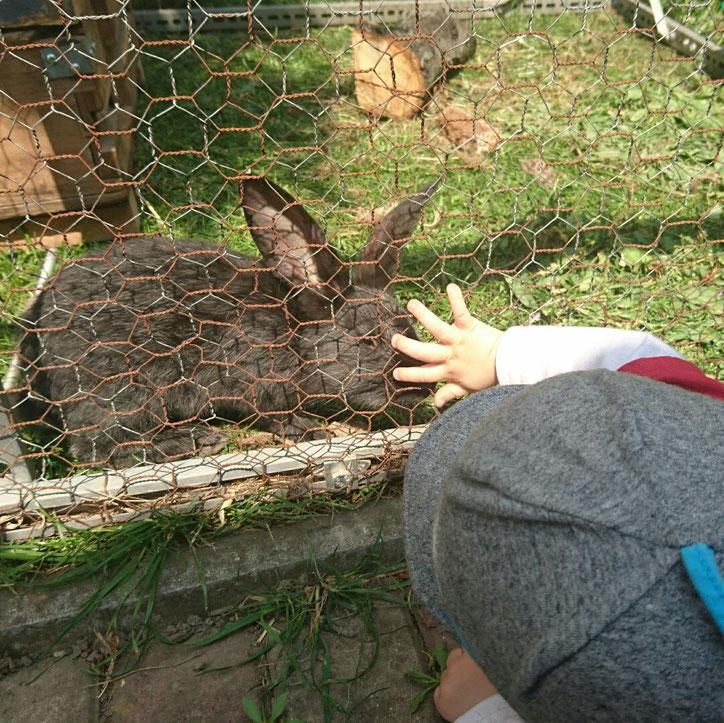 #12von12 #12v12 Nasenstups Baby Kaninchen #Dorfkine