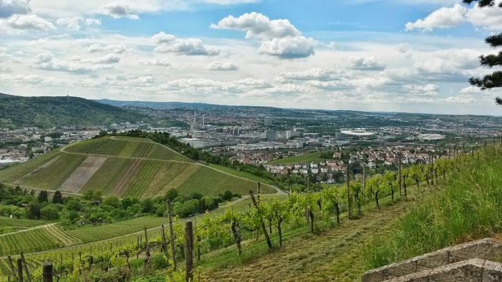 Виноградники и завод Мерседес возвращают обратно на юг Германии