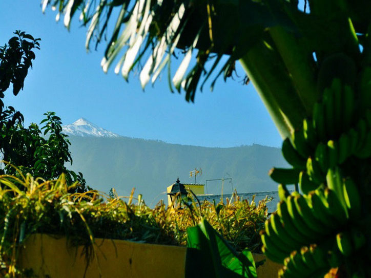 Blick zum Teide durch die Bananen von der gemieteten Urlaubswohnung auf Teneriffa