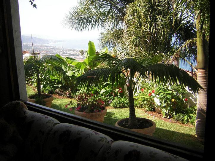 Blick aus dem Wohnzimmerfenster in den Garten