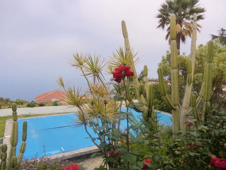 Bild: Blick  durch Rosen zum Pool bis zum Meer von der modernen und ruhig gelegenen Villa in La Matanza im Norden von Teneriffa.