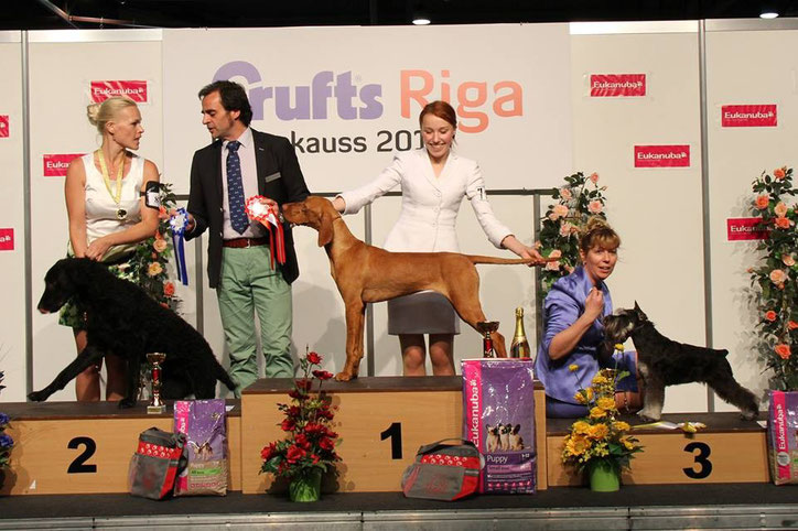 Anima nearly 9 months old winning Puppy BIS