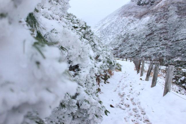 富良野岳登山道