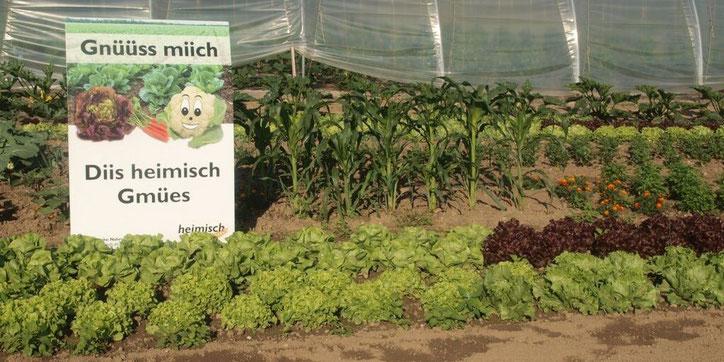 Einheimisches Gemüse