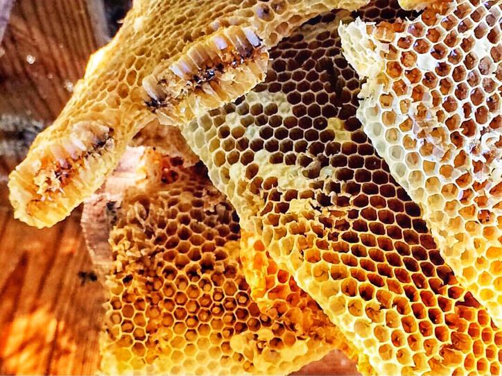 日本ミツバチの巣と蜂蜜