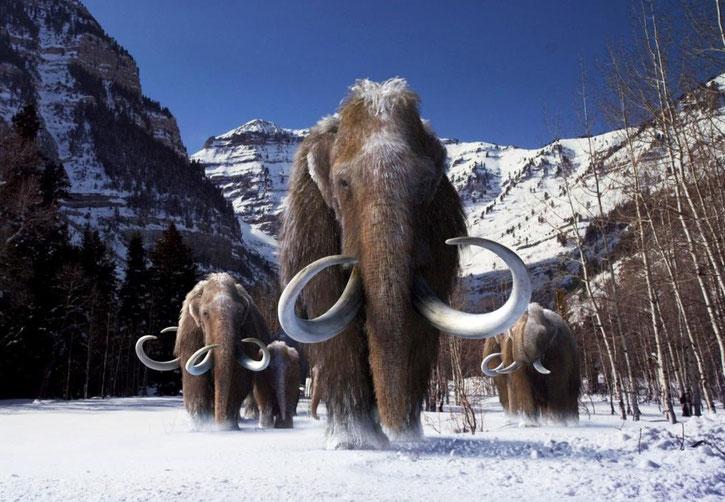 mammouth laineux fiche animaux disparus  habitat repartition alimentation poids taille reproduction