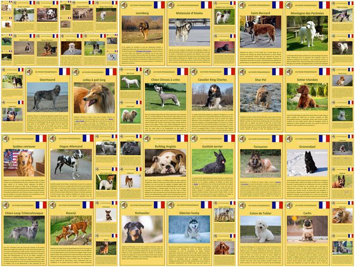 60 fiches identité chiens comportement caractere origine poils sante couleur entretien