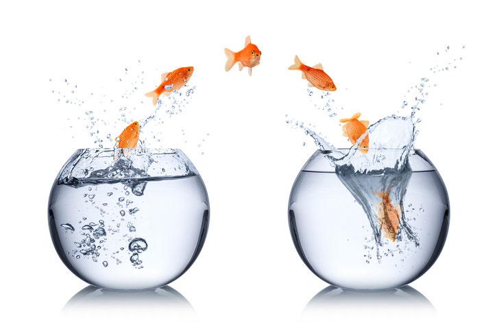 Change-Management: Veränderungen zusammen mit Mitarbeitern / Belegschaft konstruktiv umsetzen. Beratung und Service in Sachen Veränderungsmanagement bei ib Personalpsychologie Online Konferenzen - Mitarbeiter-Workshops, Vorträge, Seminare