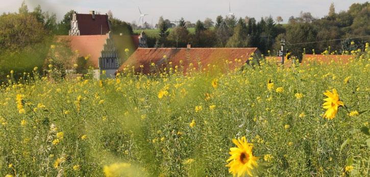 Sonnenblumen über der Schlossanlage, Foto: Eike von Watzdorf