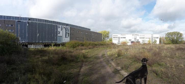 lost place_Camping_Neubrandenburg_Wohnmobil_Hund_Norwegen