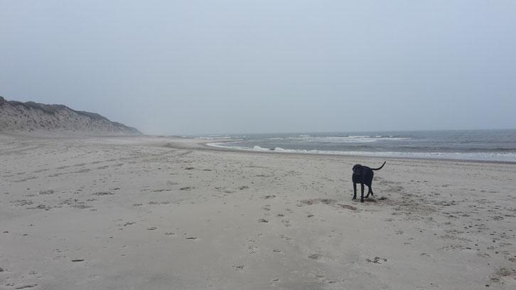 Nr Lyngvig_Camping_Dänemark_Wohnmobil_Hund