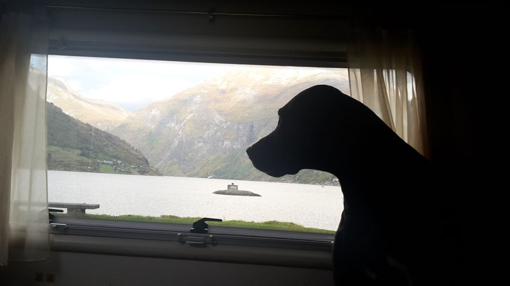 Geiranger Camping_Wohnmobil_Hund_Norwegen_Erfahrungen