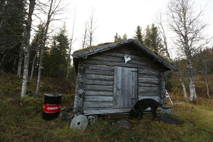 Rentier_Norwegen_E10_Wohnmobil_Hund_Die Roadies