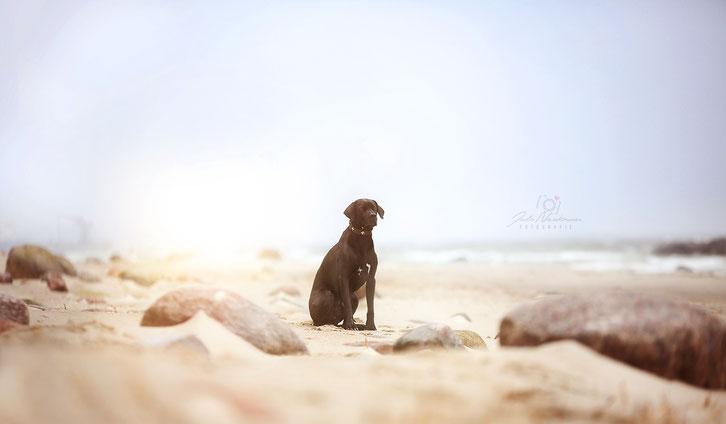 Hund_Hundestrand_Ostsee_Lubmin_Wohnmobil