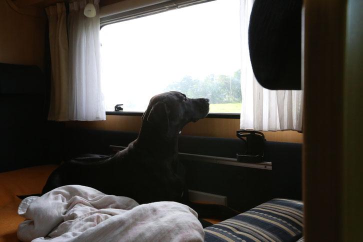 Schottland_Reisetagebuch_Reiseblog_Wohnmobil_Die Roadies_Hund