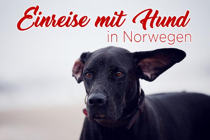 Einreise, Hund, Norwegen, Gesetz, Vorgaben, Bestimmungen_Die Roadies