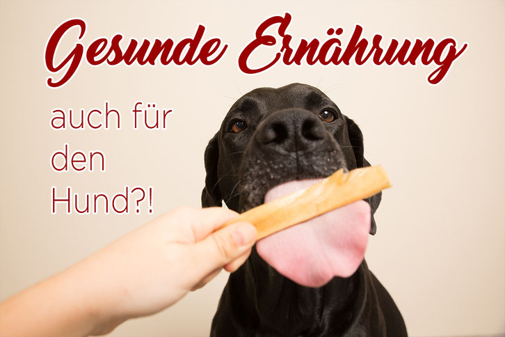 Hundefutter, Inhaltsstoffe, Leckerchen, Hund, Gesundheit