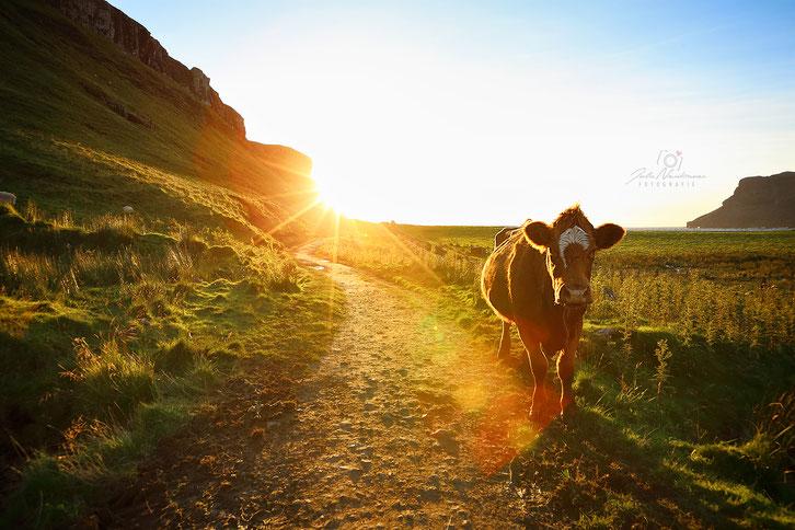 Schottland (683) Talisker Bay_Isle of Skye_Die Roadies_Wohnmobil_Hund_Reisetagebuch