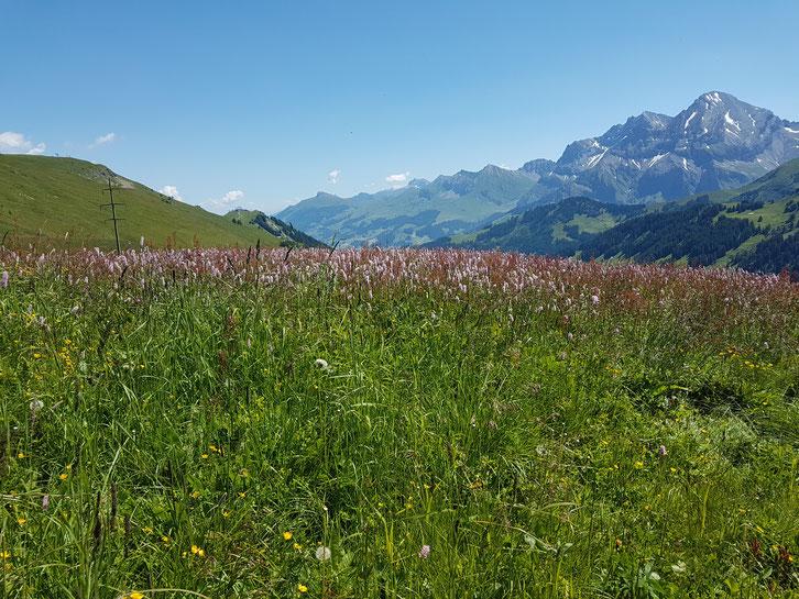 Wanderung auf dem Blüemlisweg in Adelboden