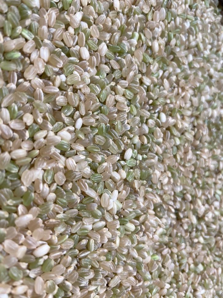 古代米(みどり糯)の玄米