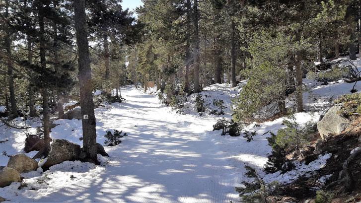 Camí TC189 Raquetes de neu