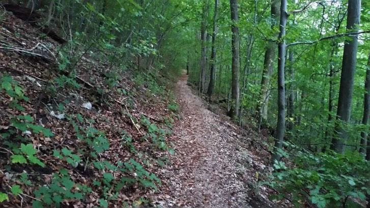 Bergauf geht es wieder über den Kanaldeckelweg...