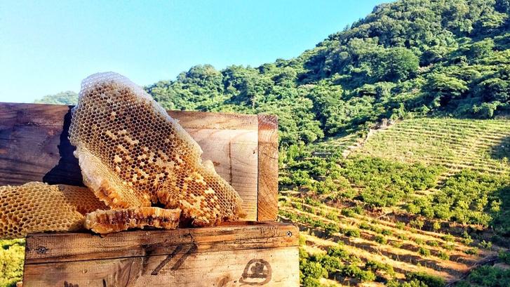 韶果園からの大崎下島風景