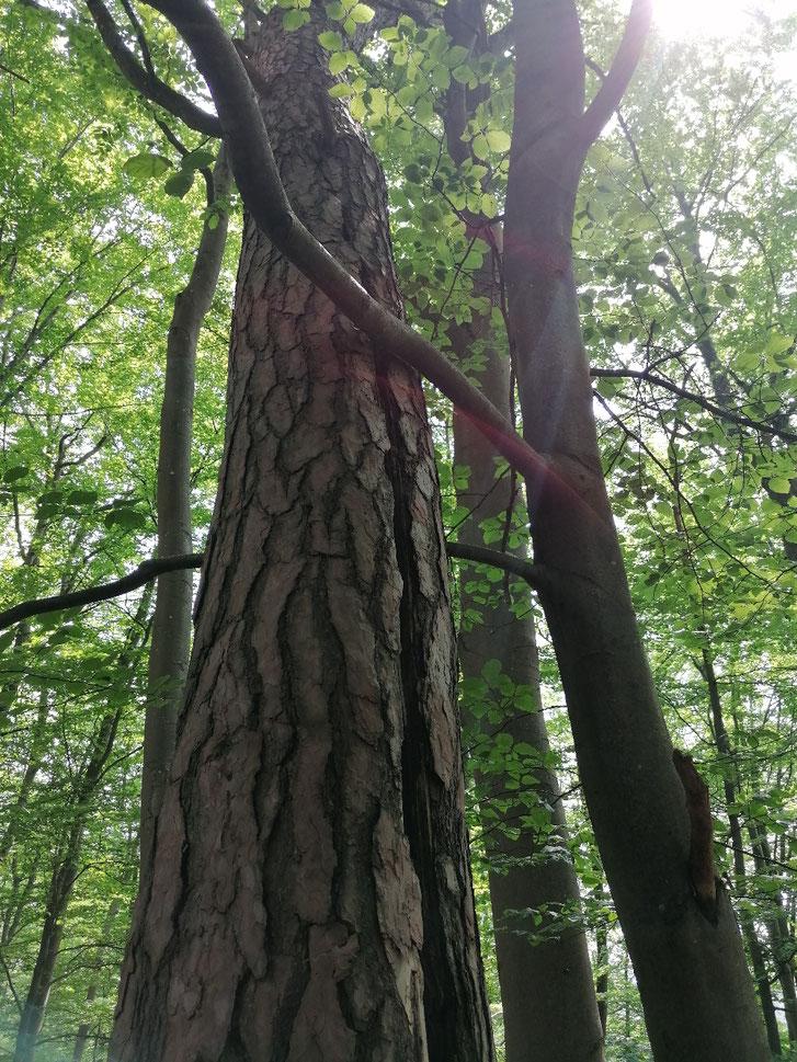 Komme ich in den Wald von Michael Rannenberg für WurzelMargit-Kursleiterin Waldbaden