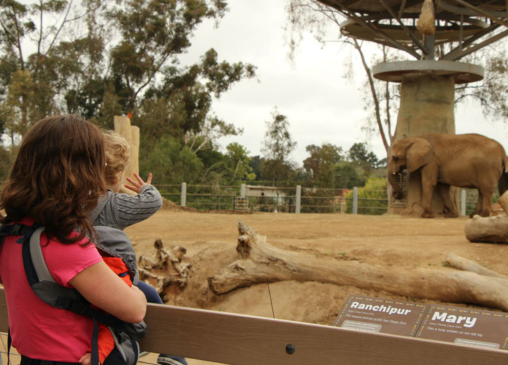 San Diego Zoo with Baby and Toddler