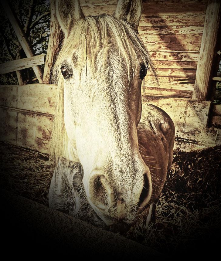Pferdeportrait aus Weiskirchen. Hier stehen tolle Pferde auf der Koppen eines Hofes. Ich Pferdeshootings und bin total pferdeverückt.
