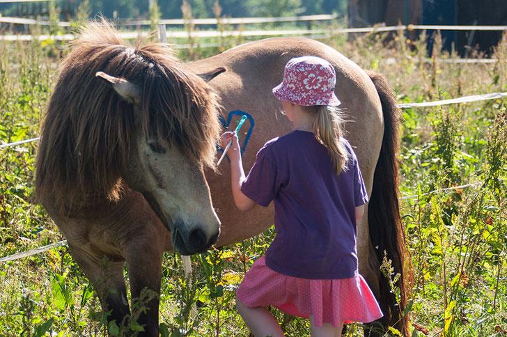 Pferde und Kinder, Pferdekurs, basteln Pferd, Pferd bemalen