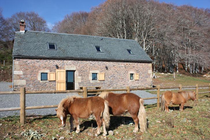les poneys au gîte du Carteyrou chez bertrand Cayrel (séjouraubrac.com)