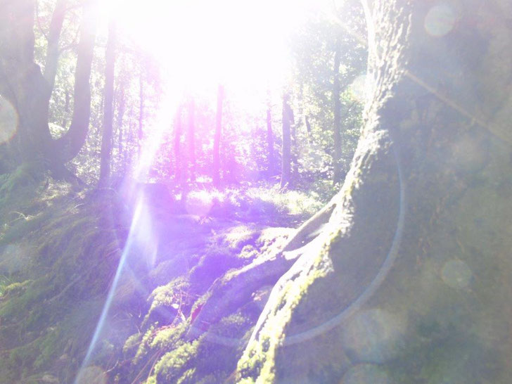 Die Öffnung, die dich für Wunder bereit macht, www.lichtwesenfotografie.com
