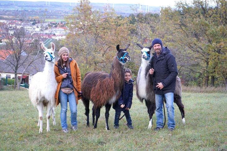 Lamas und Familie, Lama Mama, Lama, Lamahof, Lamawanderung, Lama Erlebnis, Zeit mit Lamas, Sommerein, Niederösterreich