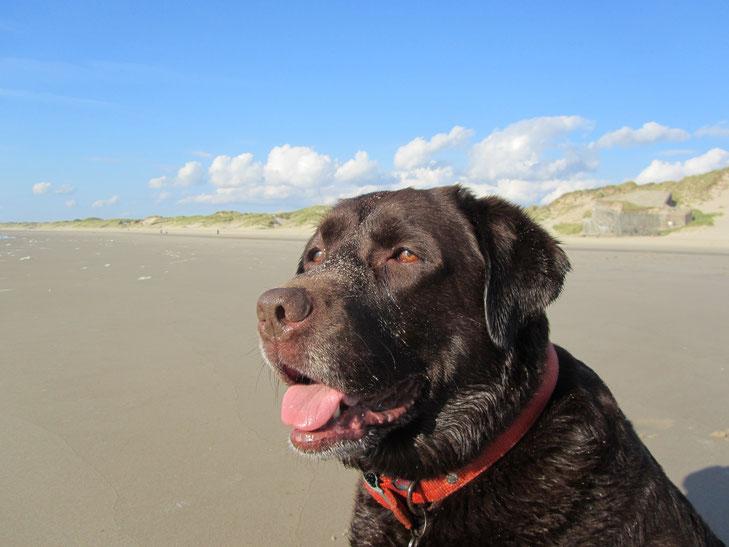 Follow Me sur la plage de Berck (plage nord)