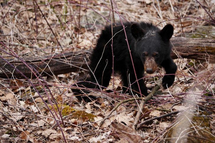 Kleiner Bär auf Entdeckungstour...