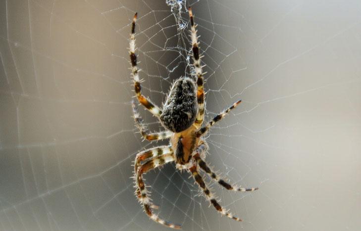 Nahaufnahme Makroaufnahme Spinne Fotoschule