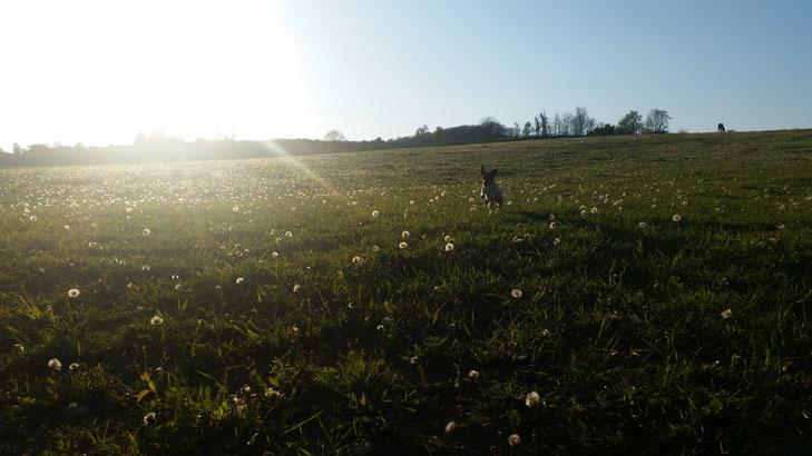 Sissi und die Pferde auf der großen Weide am Gut Kunterbunt