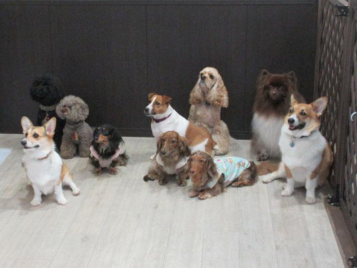 犬の保育園Baby・保育園・しつけ