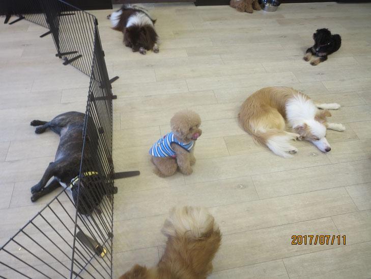犬の保育園Babyお預かり