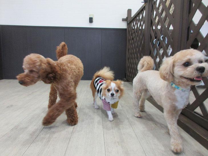 犬の保育園Baby・保育園・お預かり