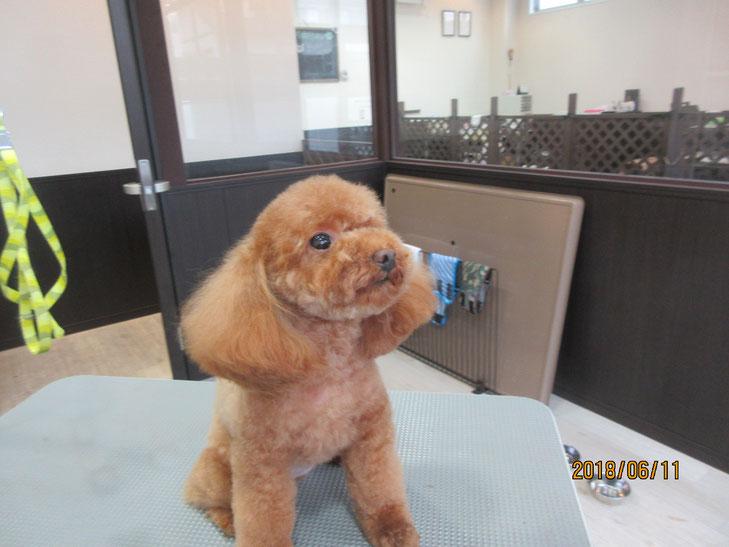 犬の保育園Baby・トリミング
